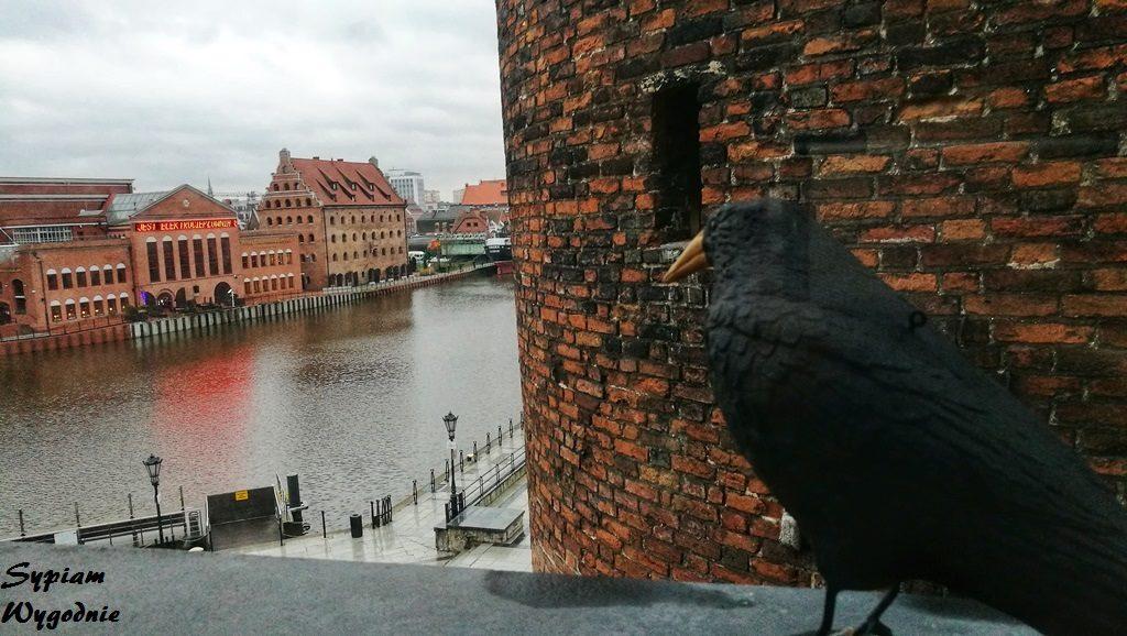 Hilton Gdańsk - widok z okna