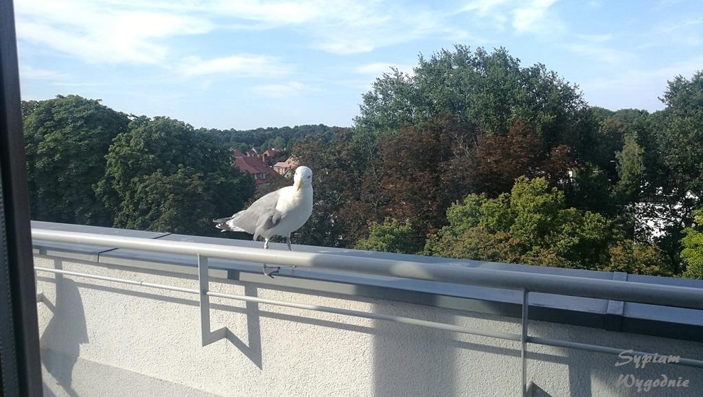 balkon w hampton świnoujście